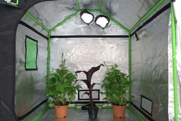 Green Qube: Roof Qube 150 grow room interior
