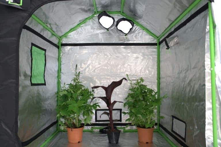 Green Qube: Roof Qube 150 grow room interior