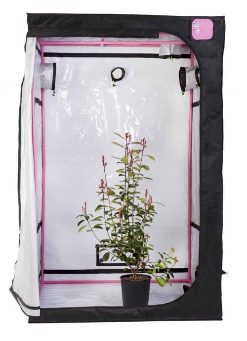 LED Qube grow tent with plant