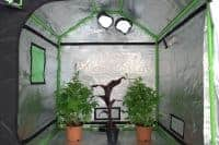 Grow tents by GQ150 grow tents